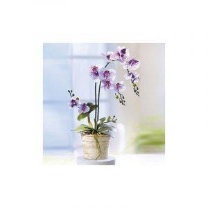Cserepes nagy selyemvirág orchidea – élethű